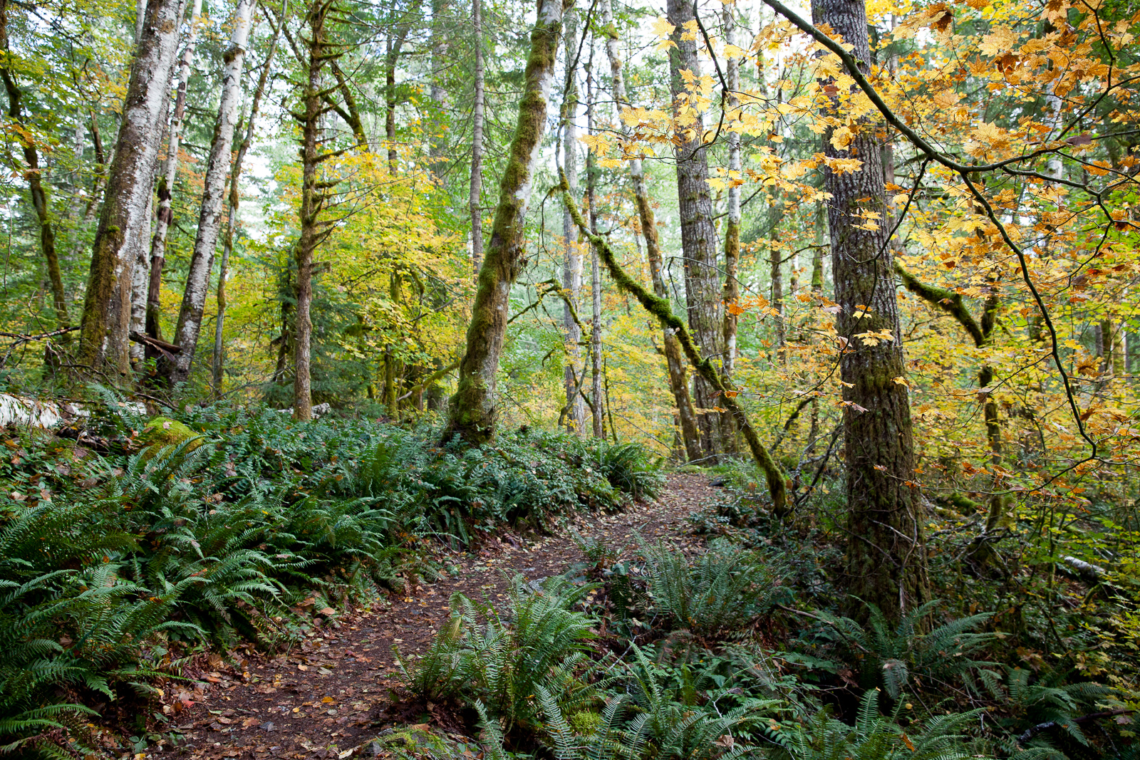 North Cascades forest trail