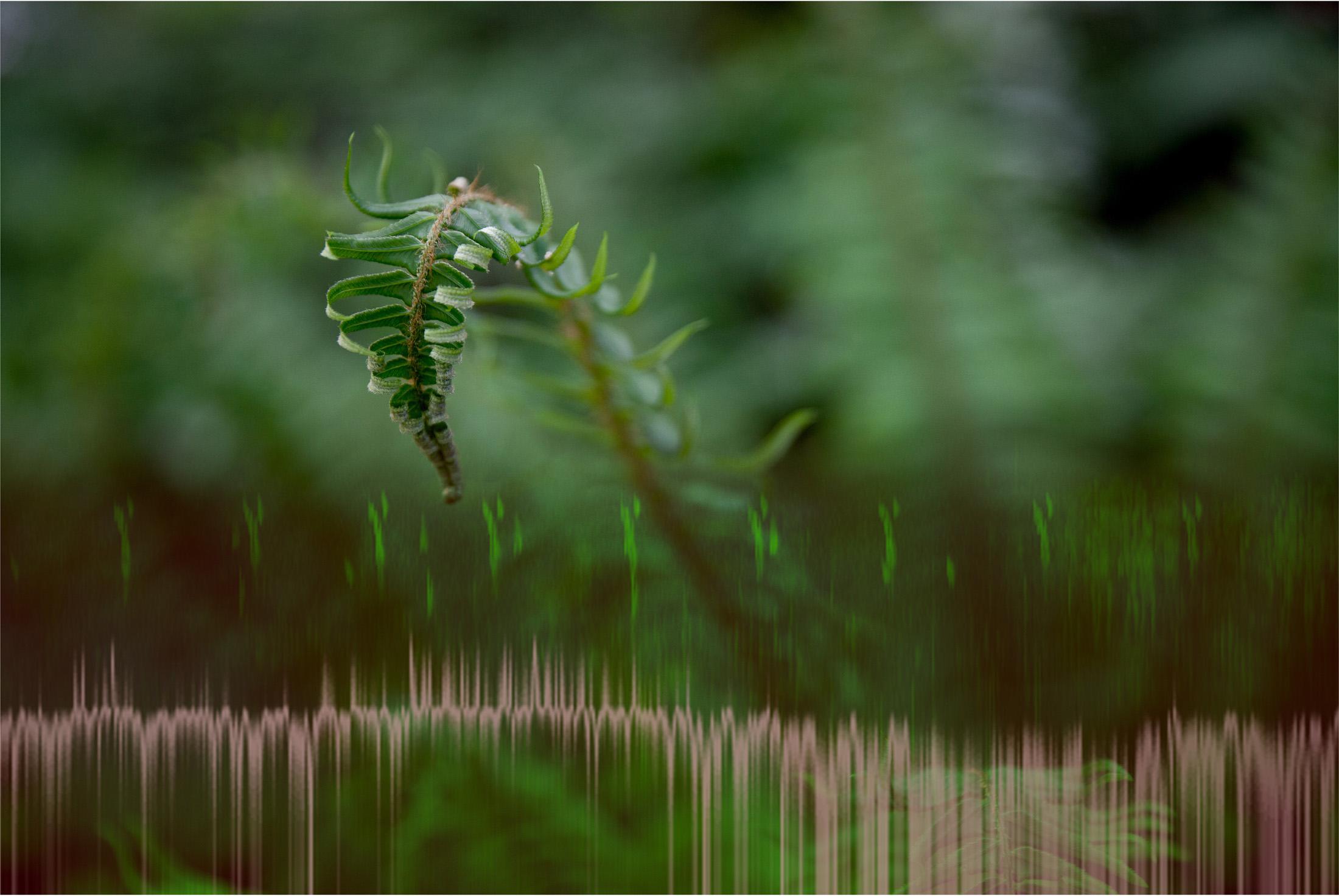 fern, birdsong, passing train