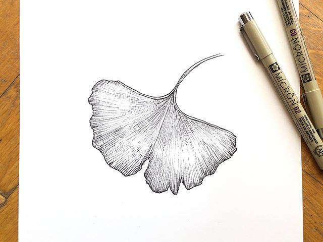 Ginko . . #art #ginko #leafdrawing #illustration #crosshatching #micron #instaart #nature #leaf #botanical #botanicalillustration #instaartist #sketch #boceto #ink #arte #ilustracion #ginkobiloba #artist #artistsoninstagram #natureart #linedrawing #linework #inkonpaper #botanicalillustration
