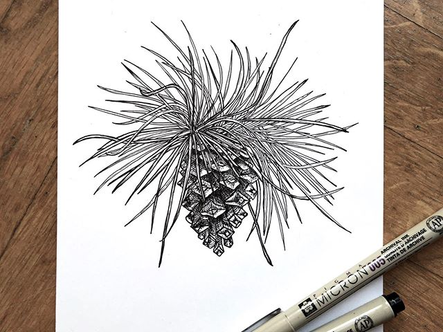 Warhol pine comb . . #crosshatching #tinta #pine #pinetree #art #instaartist #nature #andywarhol #drawing #illustration #blackandwhite