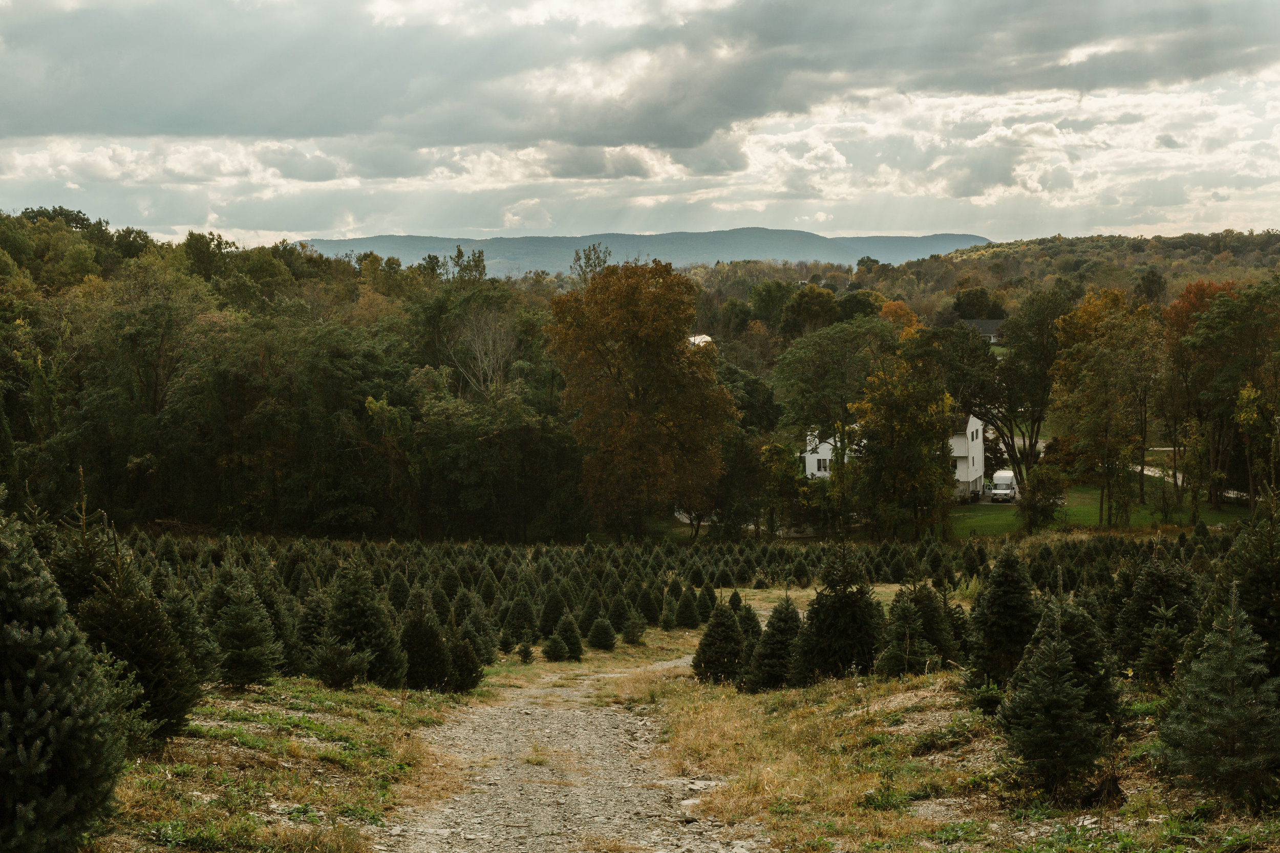 young-love-media-rustic-fall-autumn-wedding-emmerich-tree-farm-hudson-valley-warwick-new-york-getting-ready-179.jpg