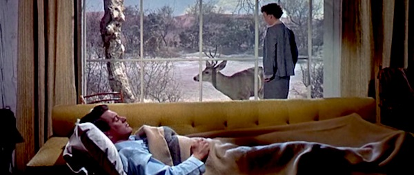 Rock Hudson, Jane Wyman and nature in Douglas Sirk's     All That Heaven Allows