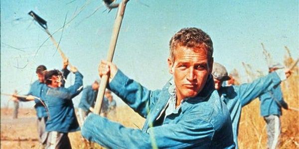 Paul Newman in Stuart Rosenberg's  Cool Hand Luke