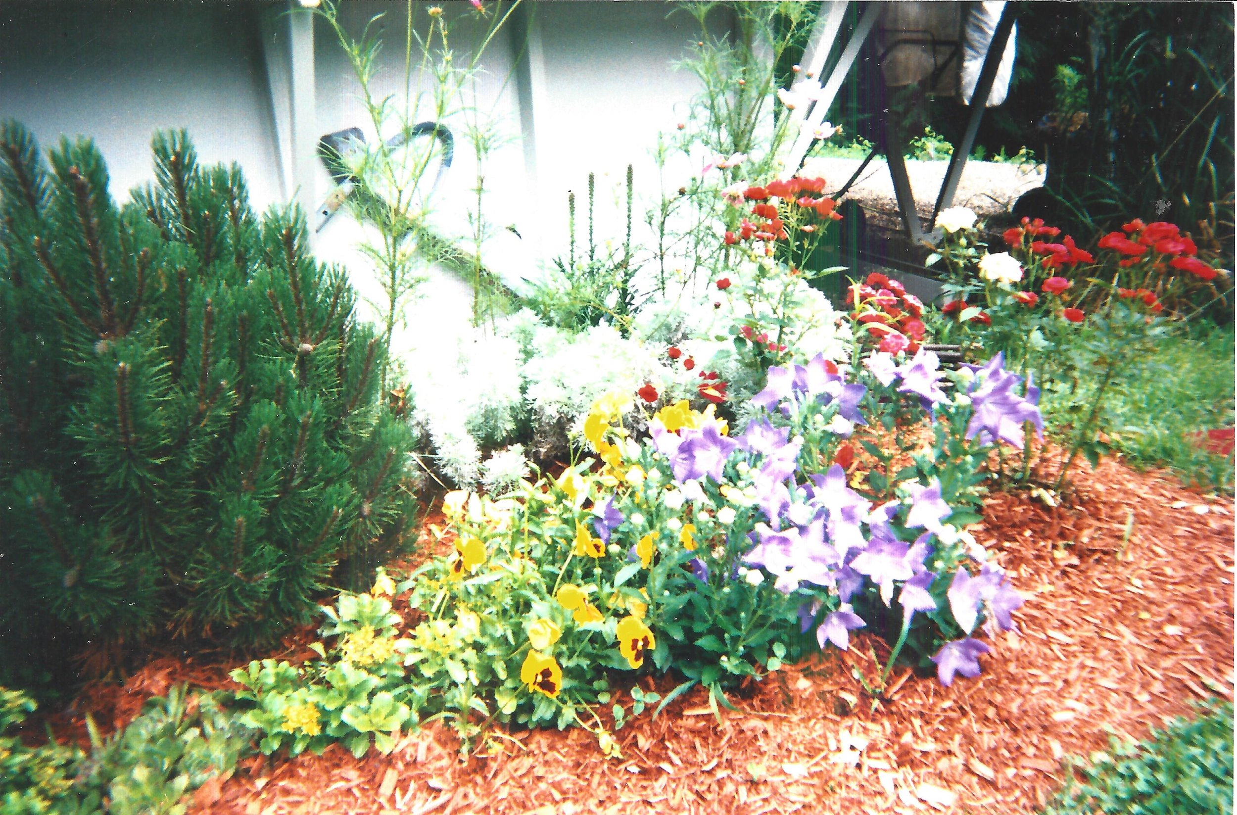 Customer Photo of Famliy Gardens