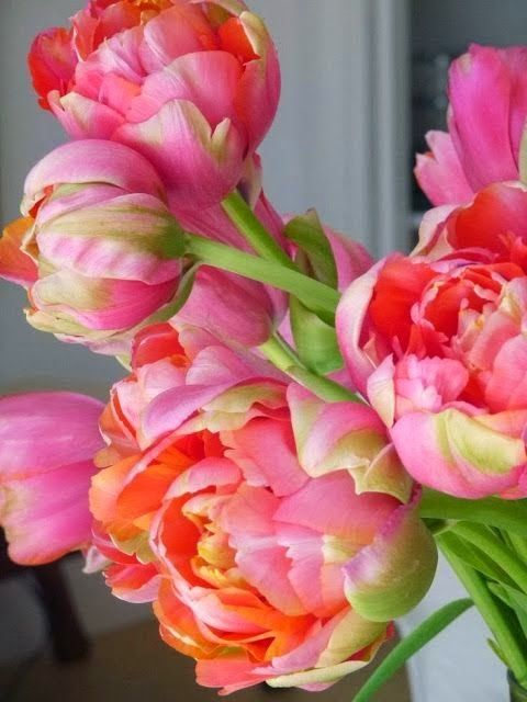 Peony tulips are the perfect way to brighten your home for Spring