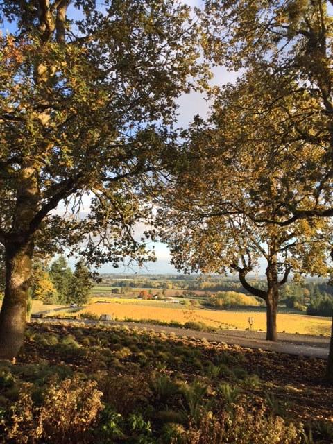 Beautiful autumn landscape in Portland Oregon