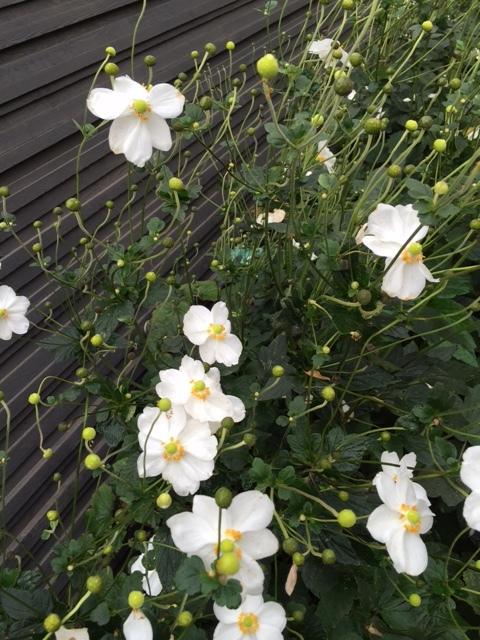 Wild Flower.JPG