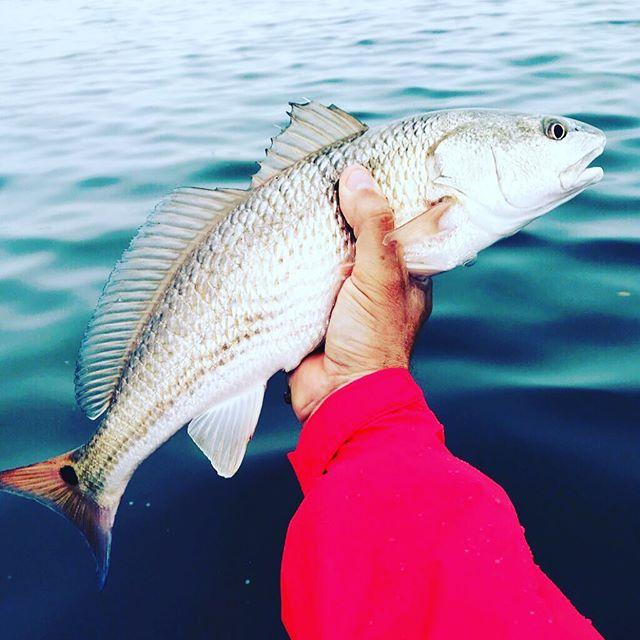 Say cheese! 🤙#redfish
