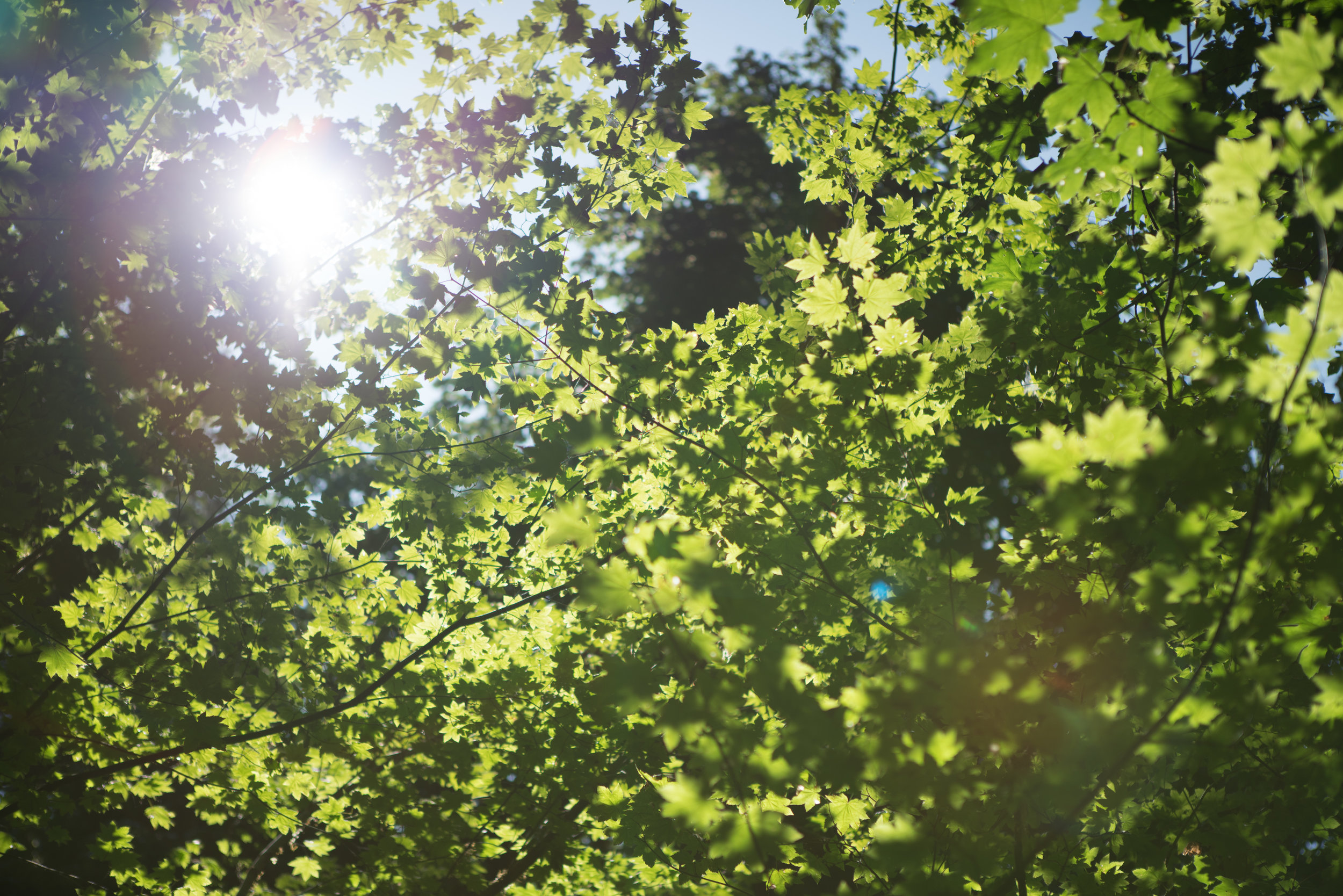 Canopy temp 01 Full Size.jpg