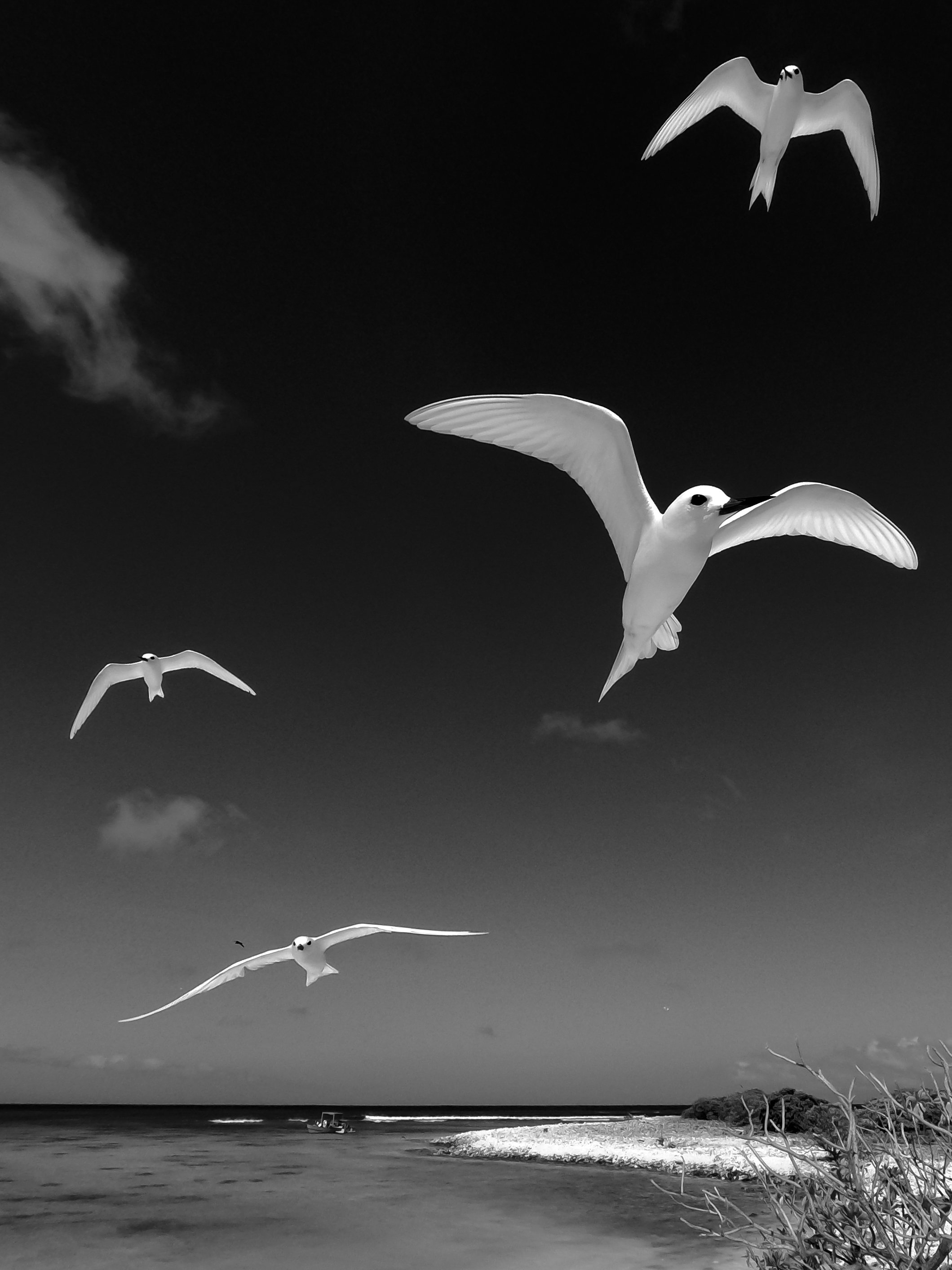 BW Birds.jpg