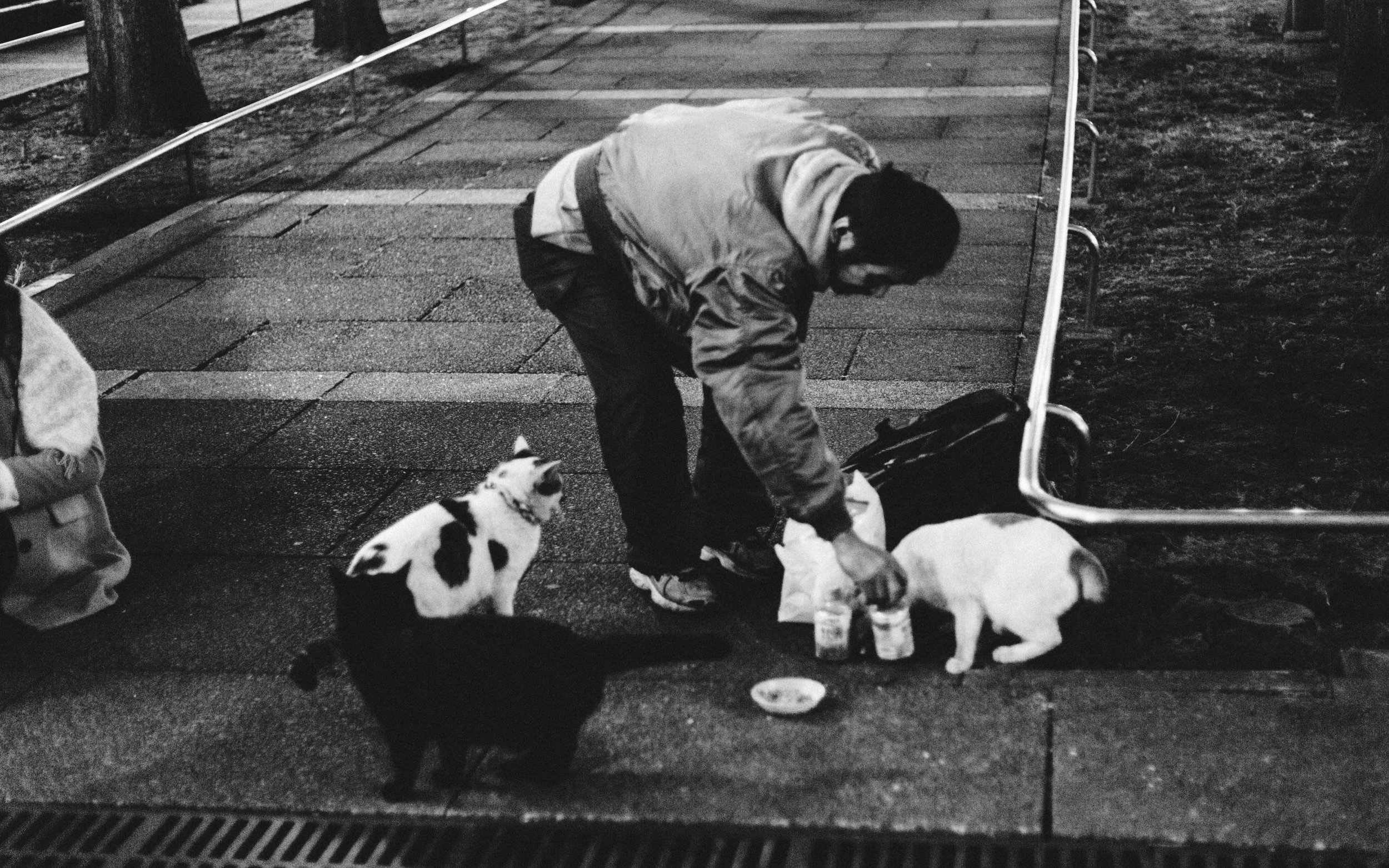 Stray cats also have a higher chance of dying during winter, as compared to summer countries' cats. Average lifespan is around 4-5 years for a cat in Tokyo.