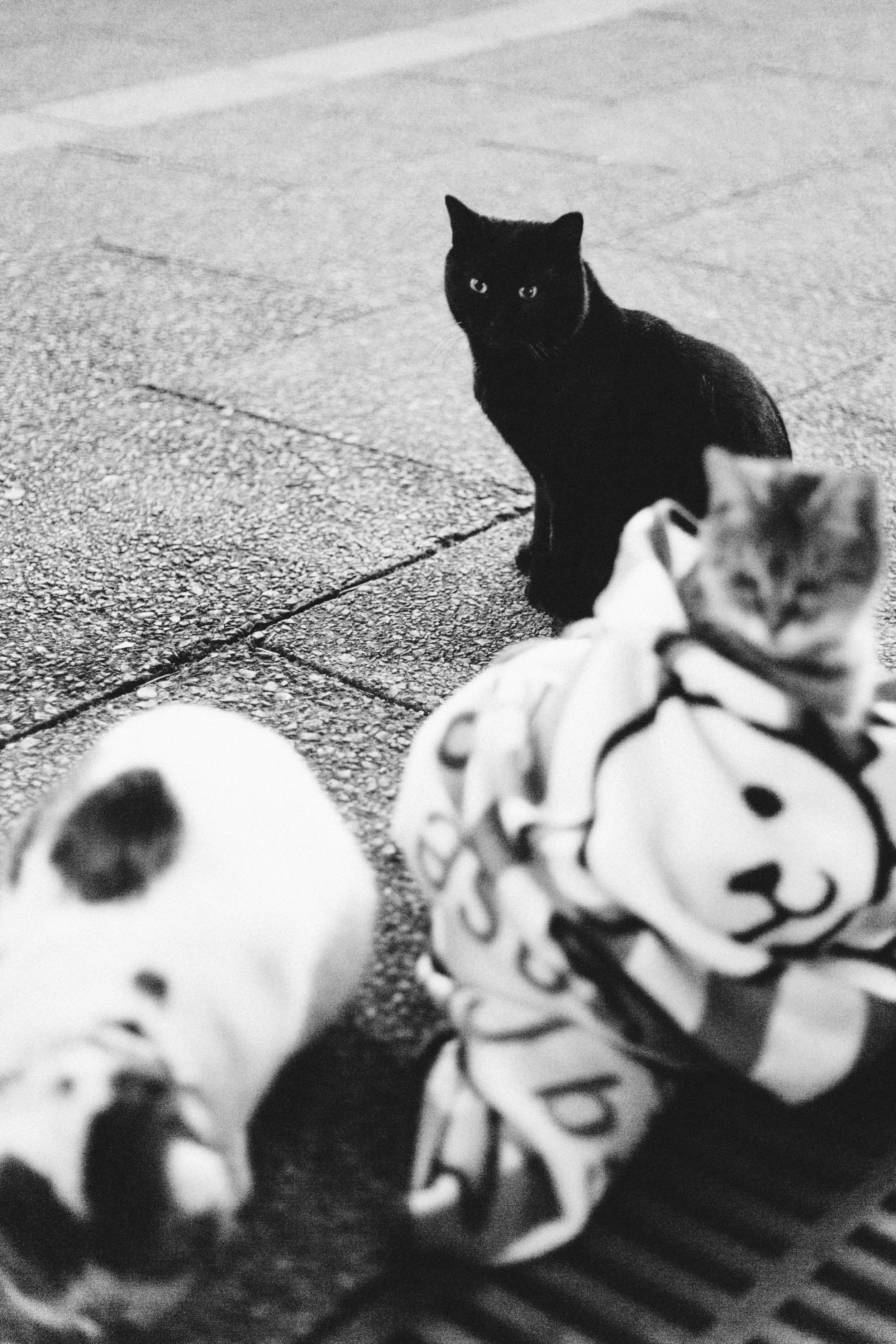 Some, such as this black cat, unable to find a human to snuggle to.