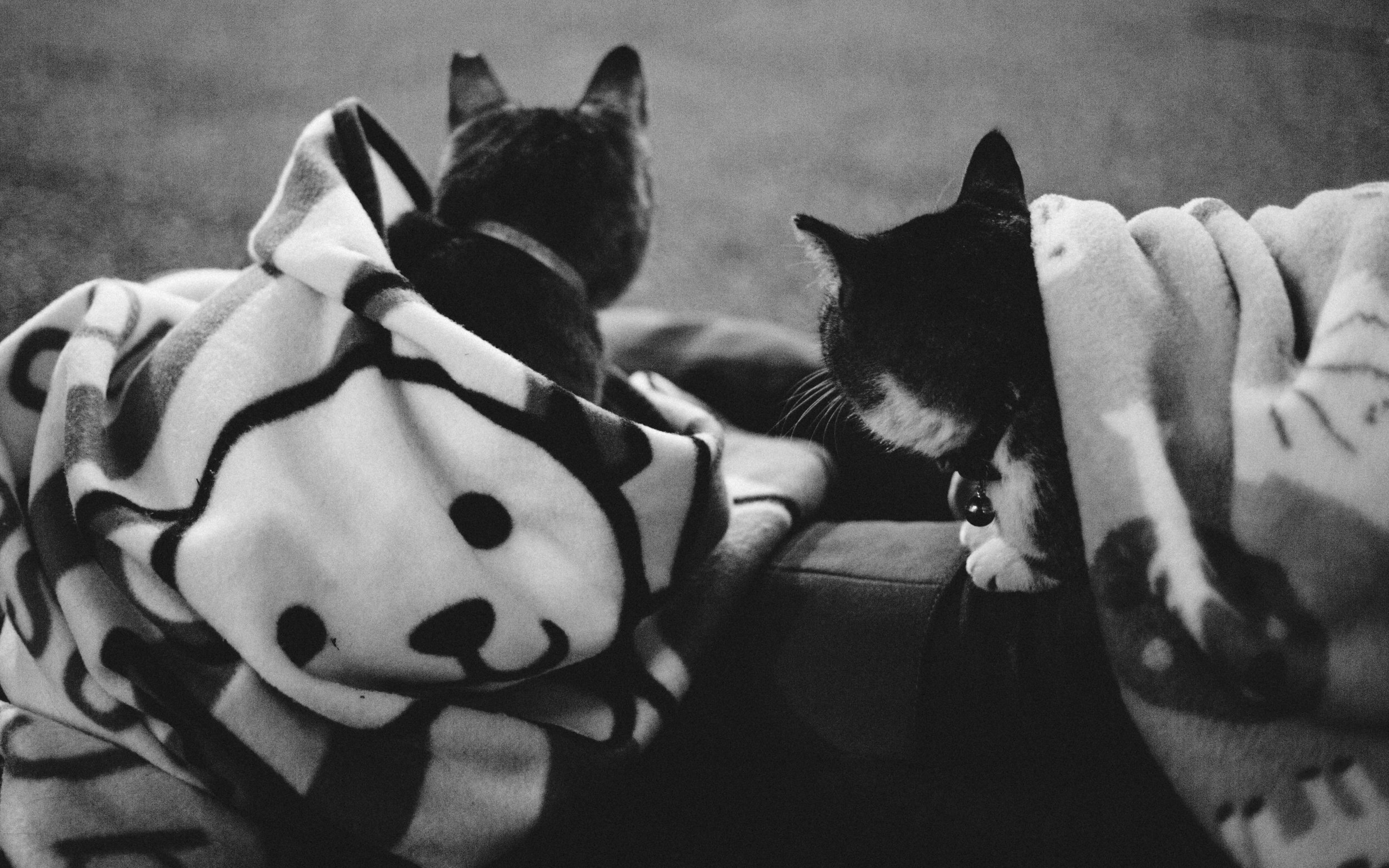 As winter comes, the cats find warmth in snuggling up to humans, particularly their caretakers.