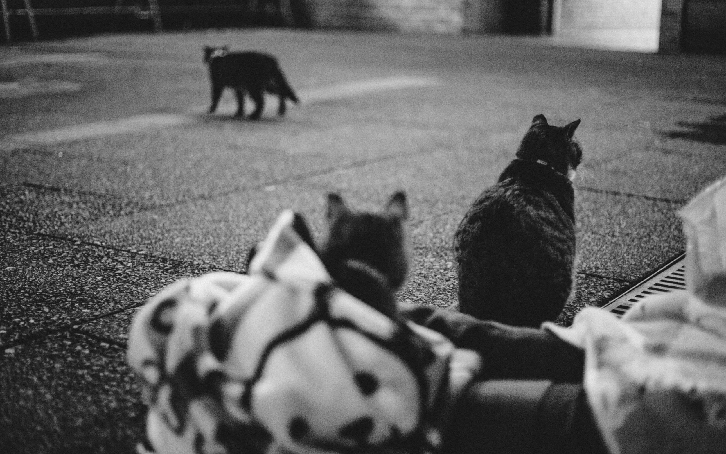 Cats waiting for their turn to snuggle in blankets.
