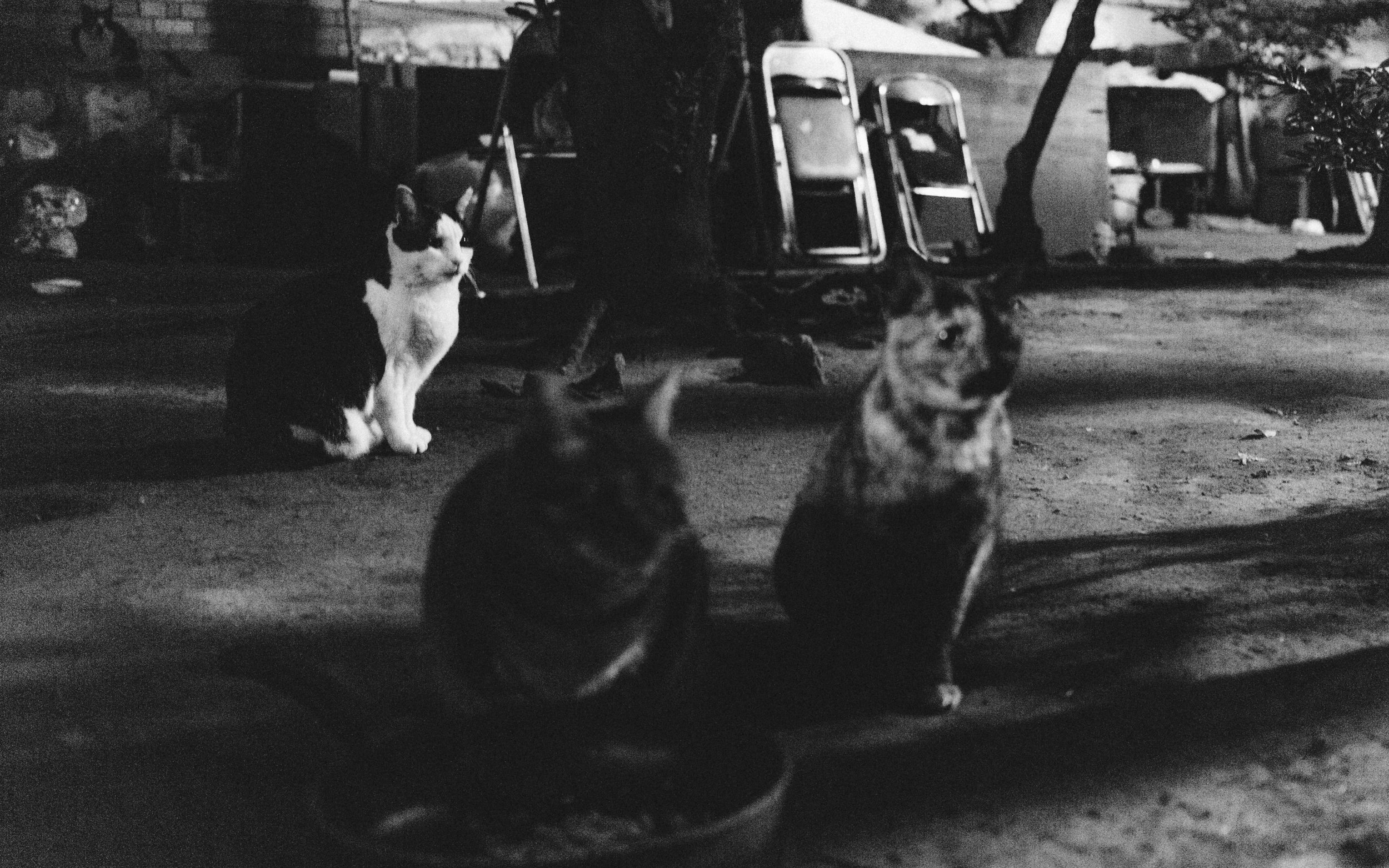 The tension in the cats as we approached closer.