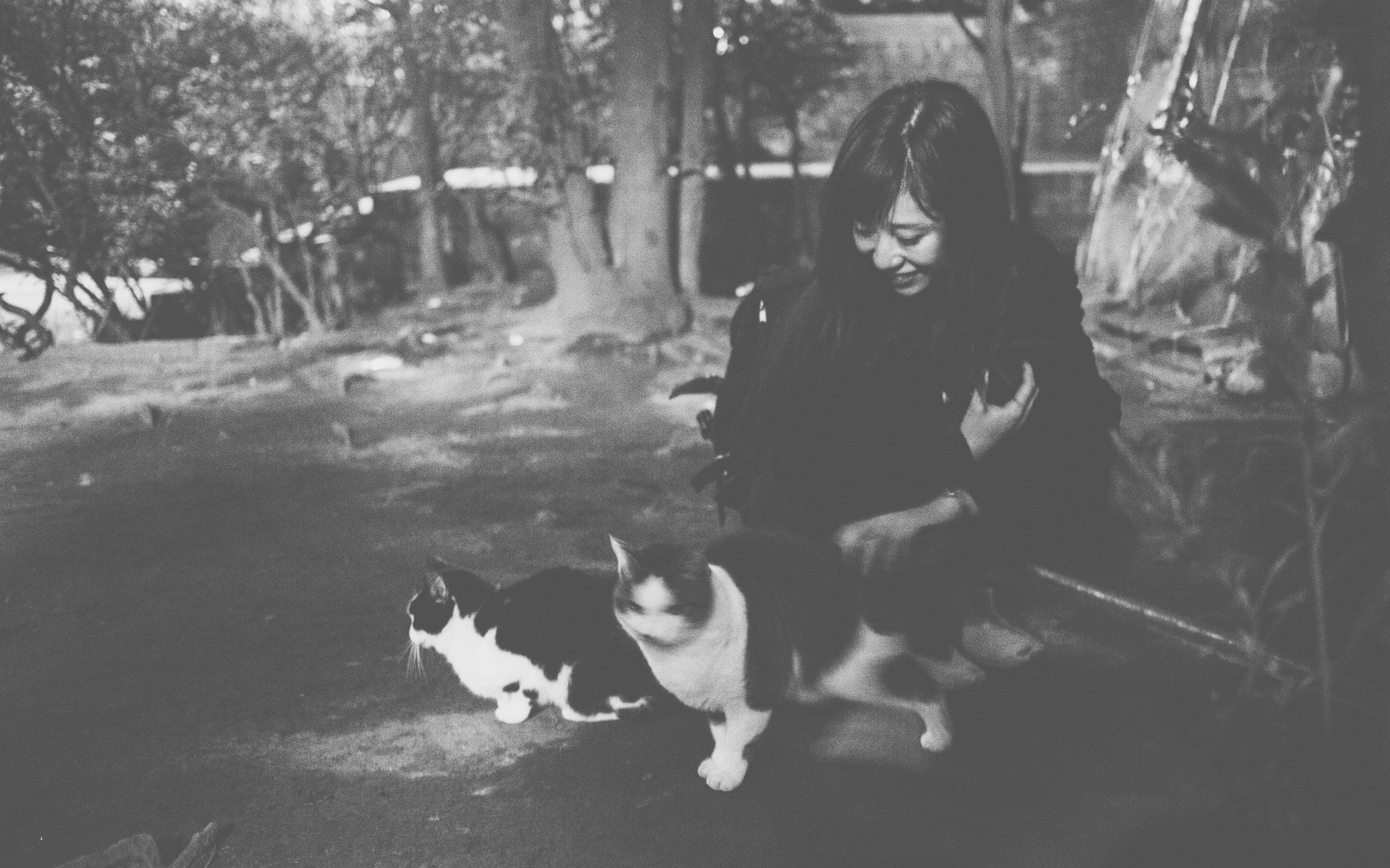 Chiyomi's successful run at taming the guard cats.