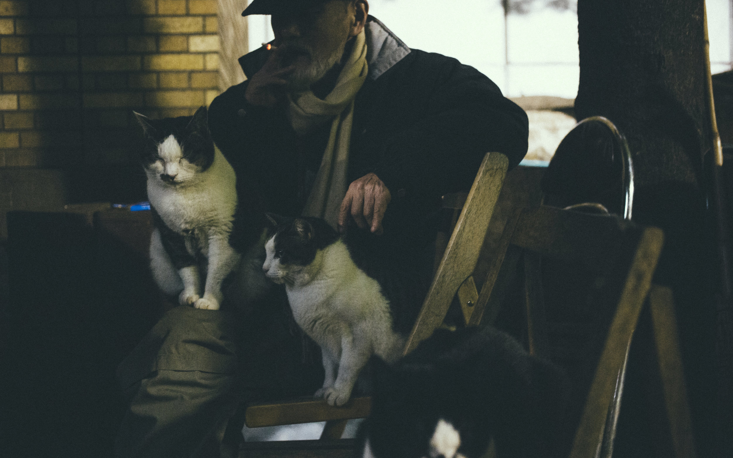 To Ojii-san, the cats probably are closer to him than his family is. Or maybe there's another story behind it.