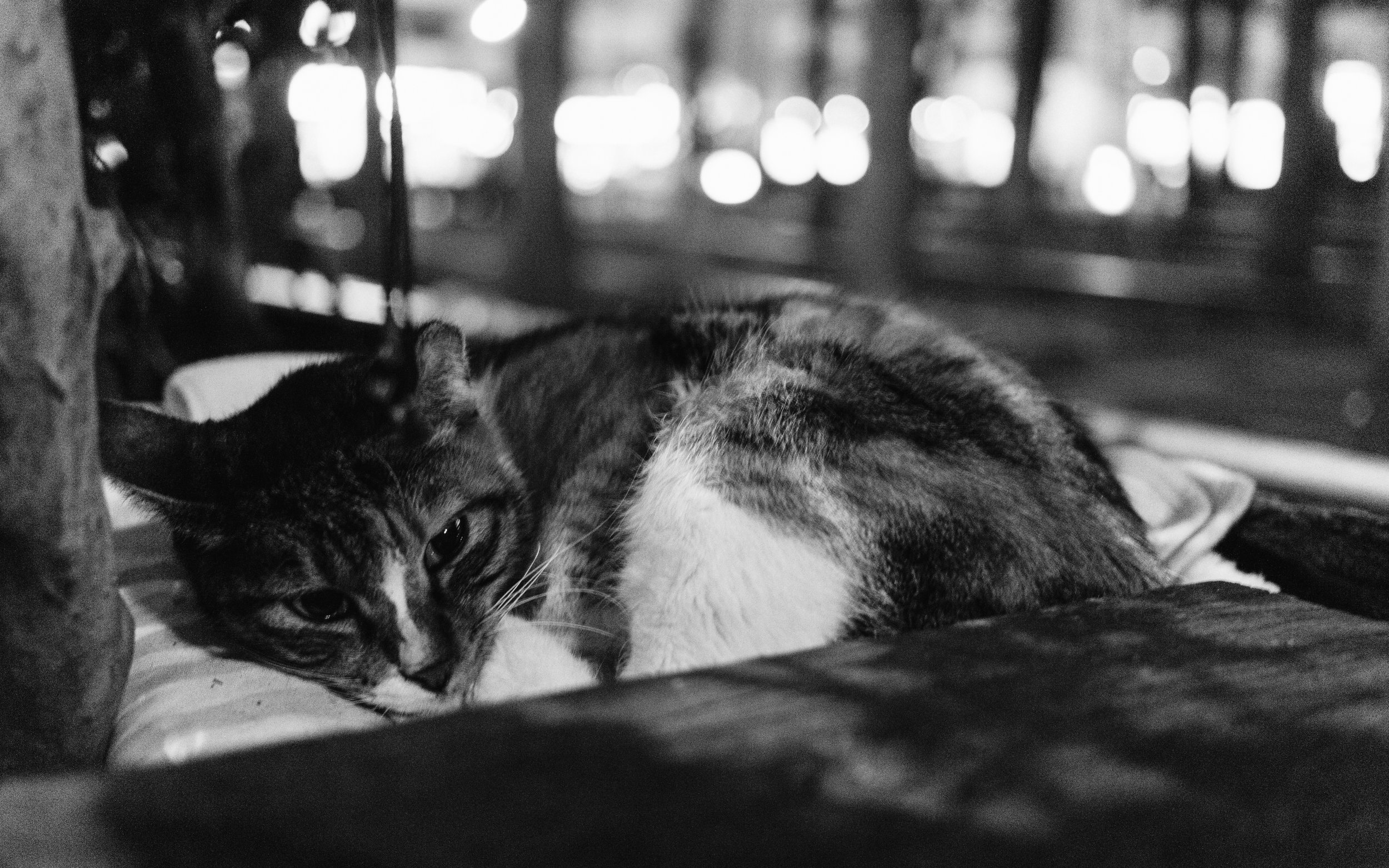 The cats are at their most vulnerable after their caretakers leave, as sometimes the extreme winter nights can freeze them to death with no warm place to run to.