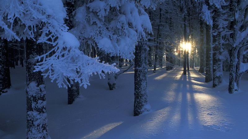 landscapes winter snow trees dawn forest sunlight season 1920x1080 wallpaper_www.wallpaperto.com_98.jpg