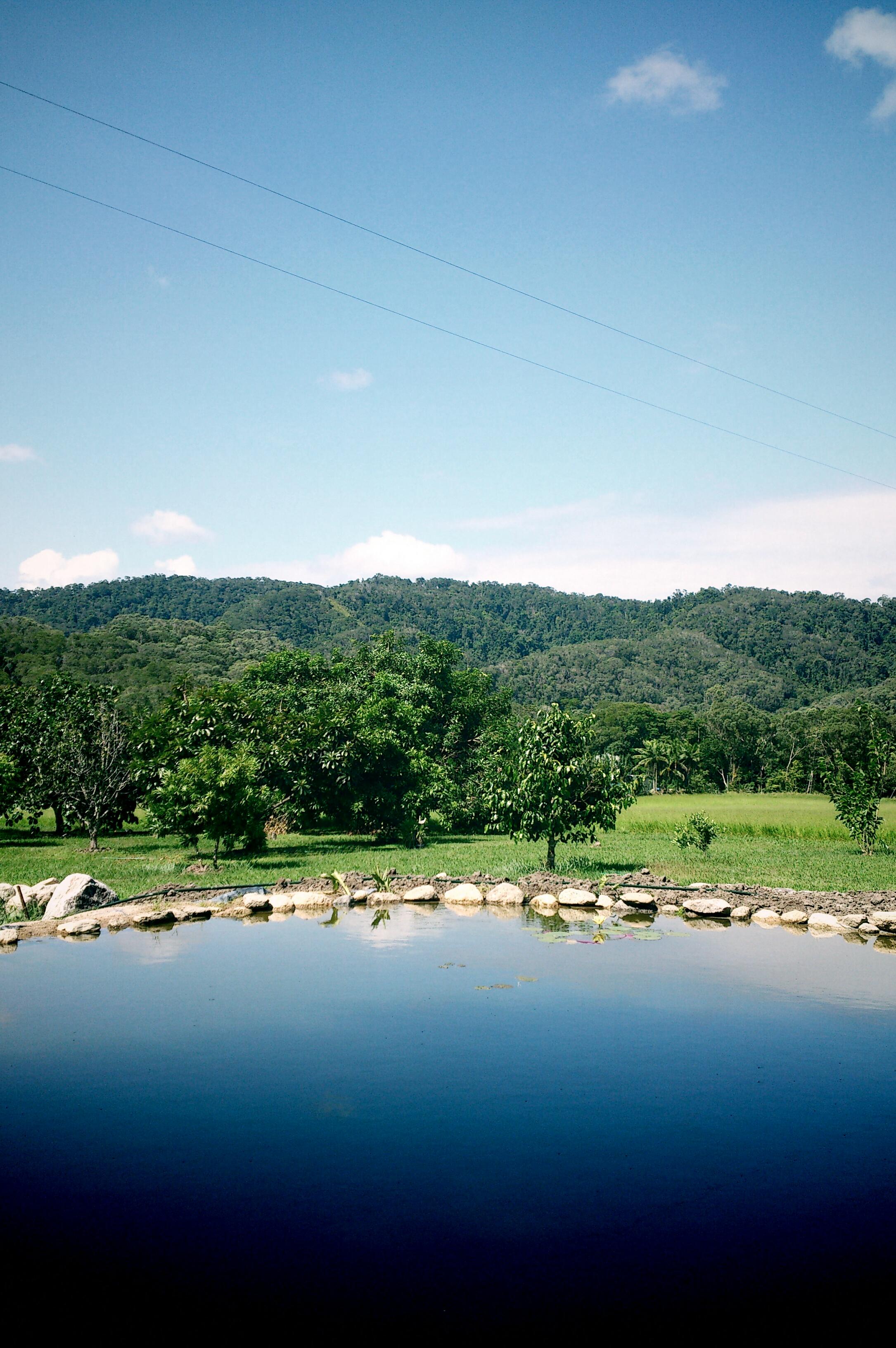 The first home in Mossman, Cairns. 第一個家@Mossman, Cairns。圖中是花園,池塘是利用利用的水源和石頭搭建,家人自己駁水源。工程涉及十多個背包客不同時間的參與,我是最後一名。