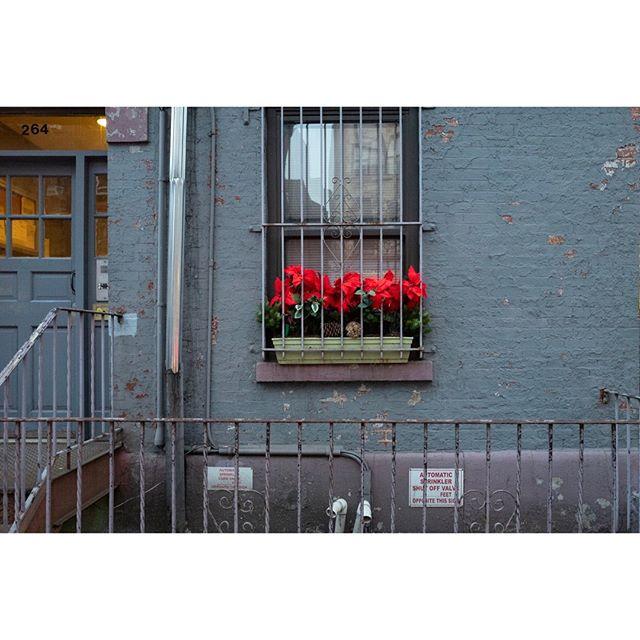 New-York, flowers⠀ •⠀ •⠀ •⠀ •⠀ #broadmag #greatermag #rentalmag #noicemag #myfeatureshoot #somewheremagazine #ourmag #stellarmagazine #gominimalmag #nextjauntmag #oksfieldmag #minimalzine #minimalmonday #minimal #streethoney #fragmentphotos #deathb4digital #paperjournalmag #flowers #red #Fragmentphotos ⠀ #fisheyelemag #cobblescope #ifyouleave #somewheremagazine #fromstreetswithlove #eyeshotmag #leica #leica_photos #leicacamerafrance
