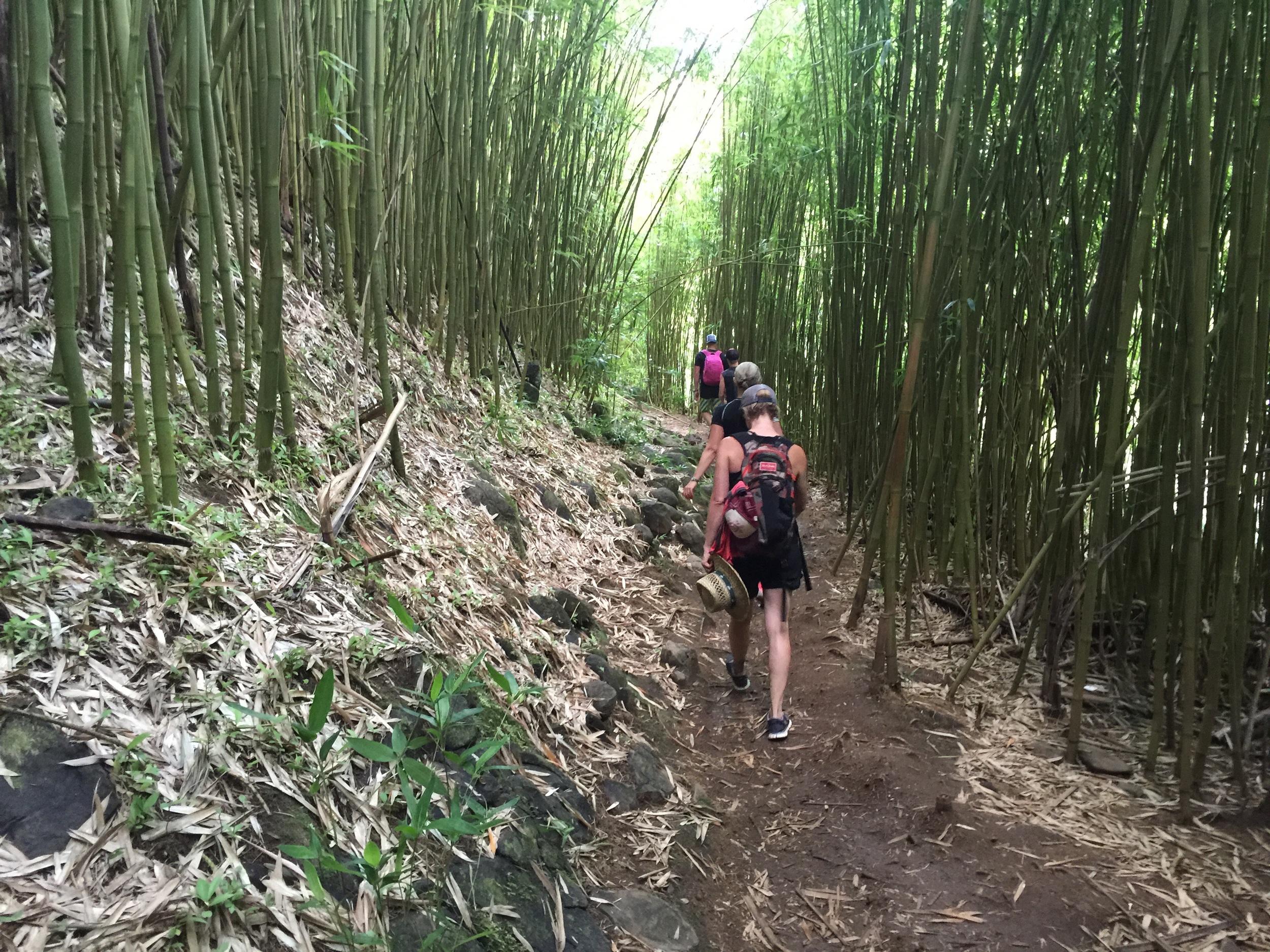 Hiking in Bamboo