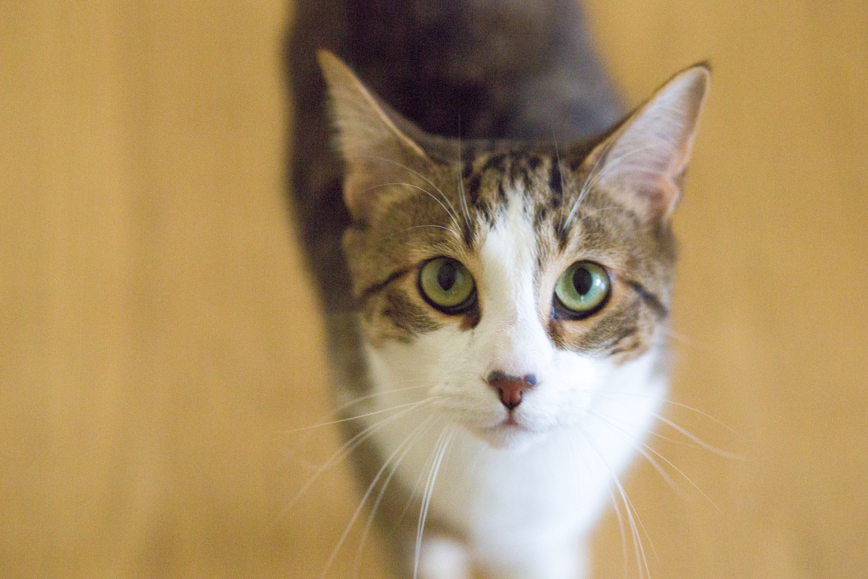 Neko (means 'cat' in Japanese)