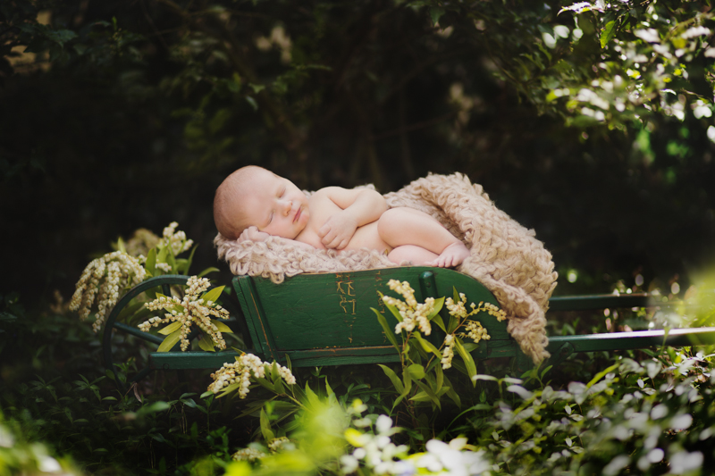 christina mcpherson photography,boston newborn photographer, boston childrens photographer