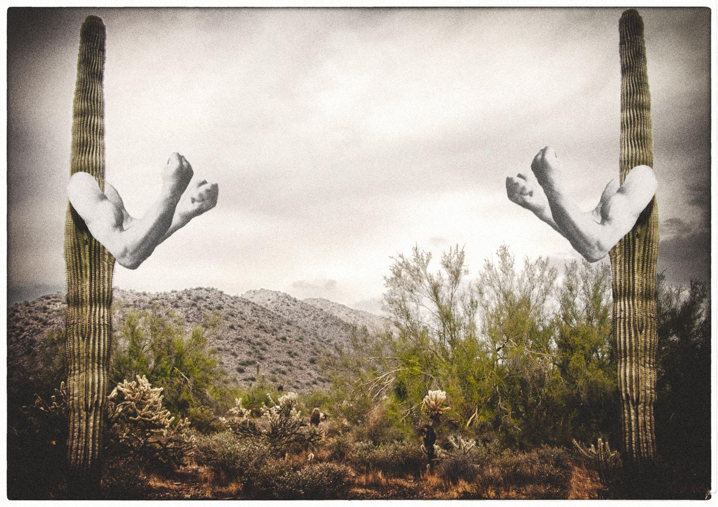 desert-cactus copy.jpg