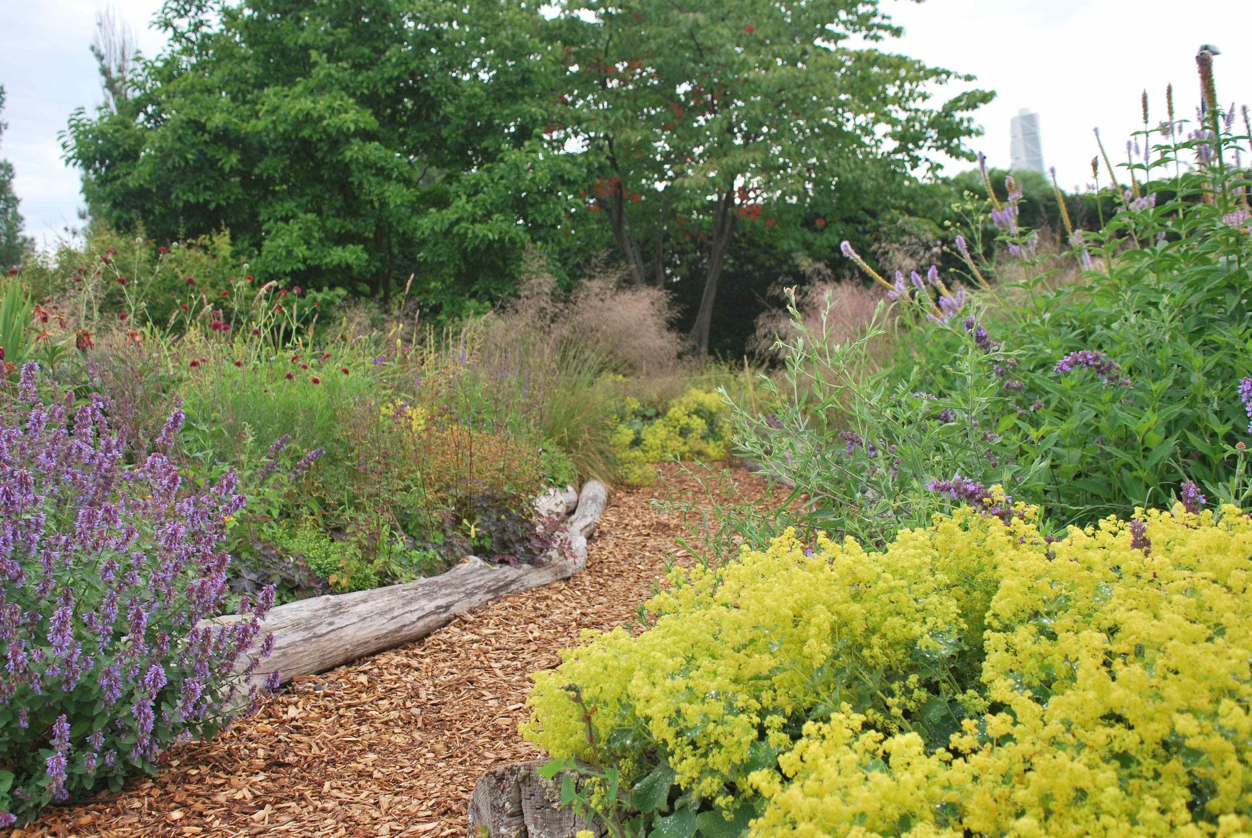 Nya Perennträdgården