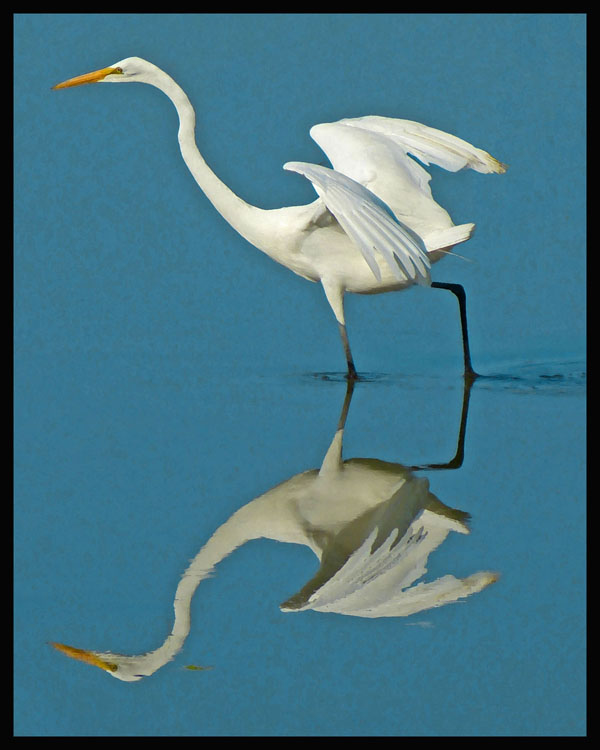Great Egret Reflection