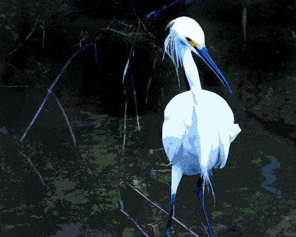 Snowy Egret in the Mangroves