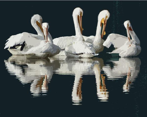 American White Pelicans II