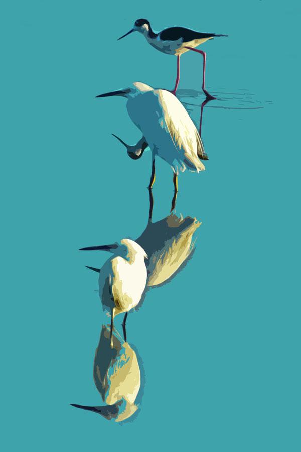 Trio    (Black-necked Stilt and Snowy Egrets)