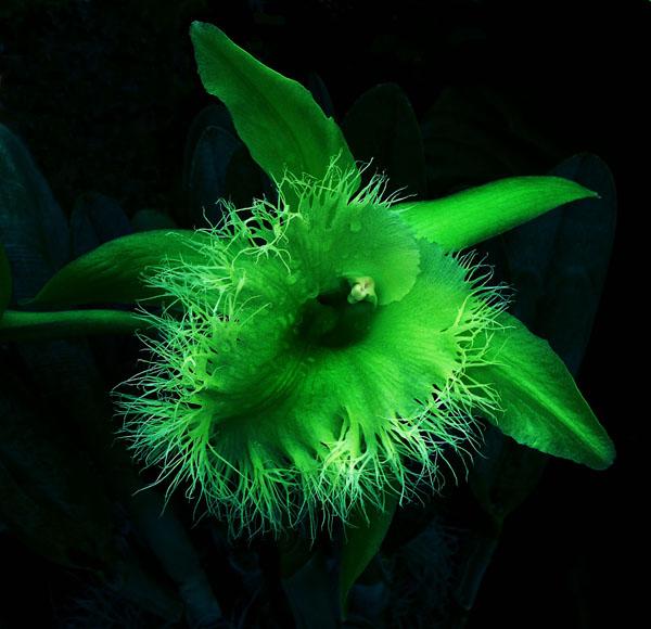 3d-cleanorchid 2.jpg