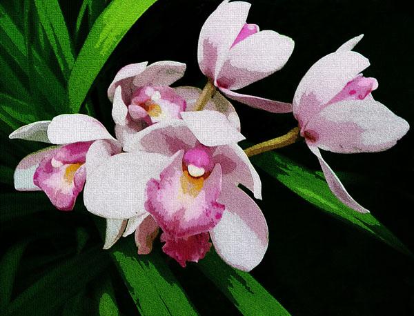 40d-orchid 13c.jpg