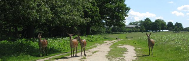 Richmond Park, London - where are all the people?