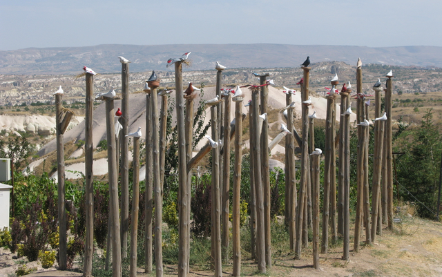 The pigeons of Pigeon Valley