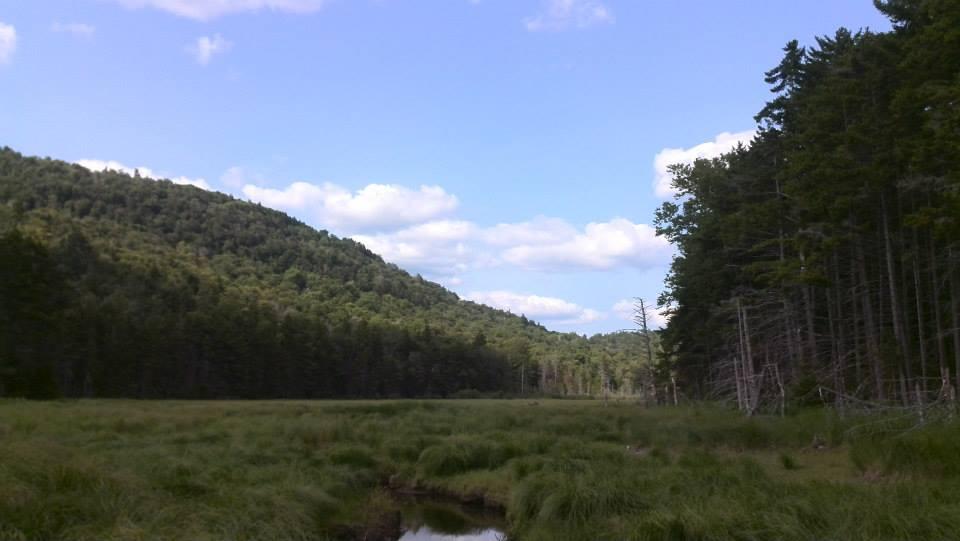 Buck Pond.jpg