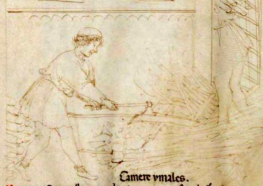 Tacuinum Sanitatis (Liege MS), f77r
