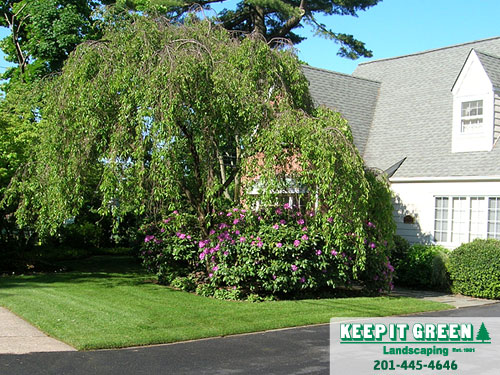 Residential Lawn Care   Ridgewood, NJ  07450