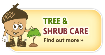 Tree & shrub care