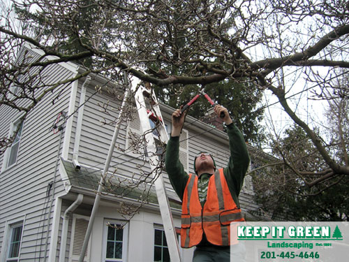Technician pruning branches for wire clearance.  Fair Lawn, NJ  07410