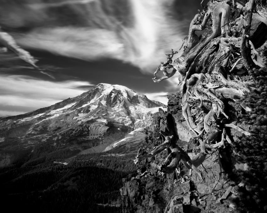 Rainier Roots