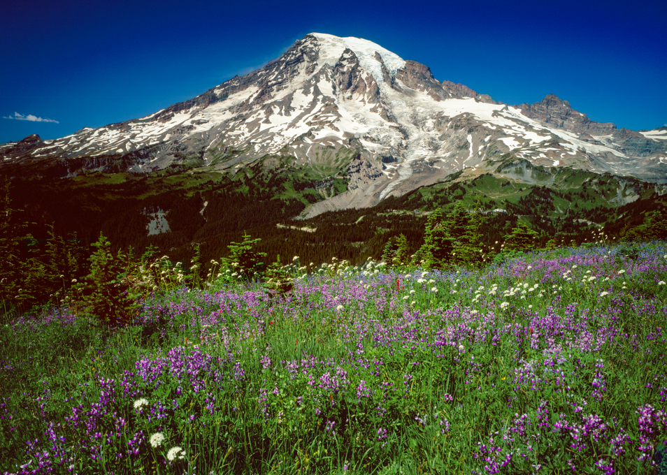 Mt. Rainier wildflowers