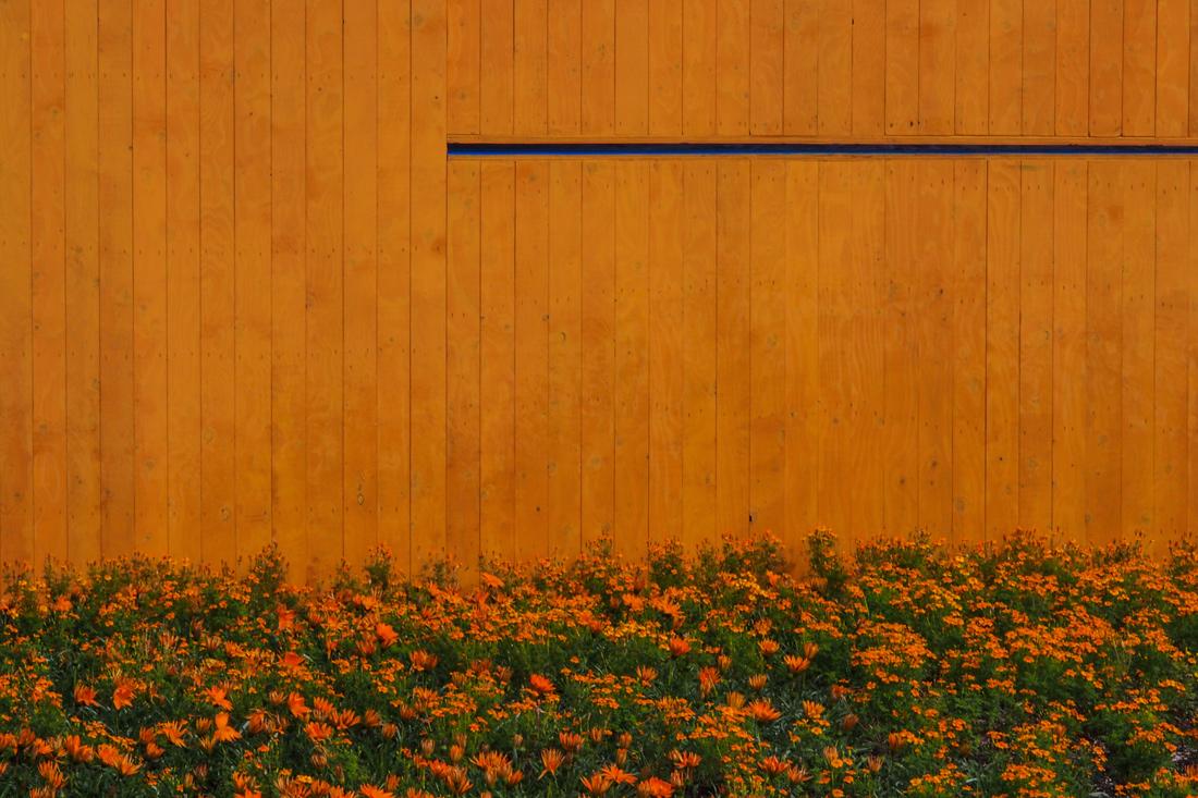 Orange Secret - Jardins de Metis 2014. Quebec, Canada