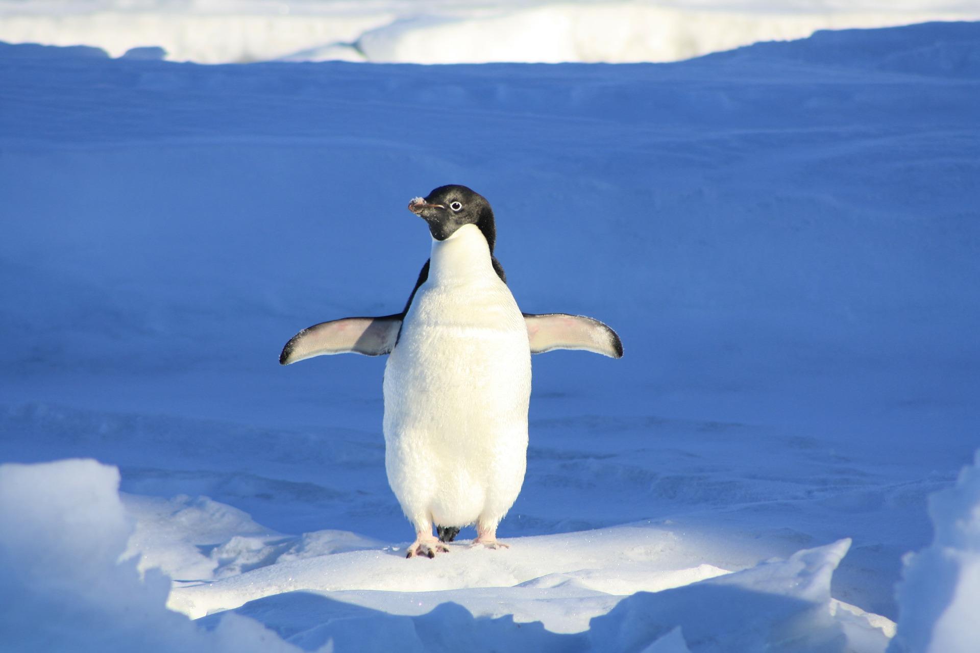 penguin-56101_1920.jpg