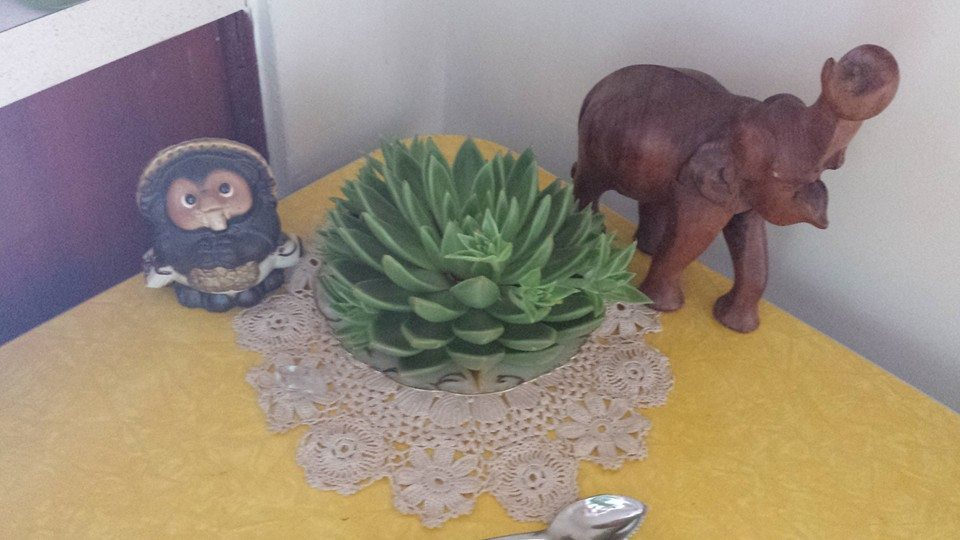 Succulent has a new home with new friends!