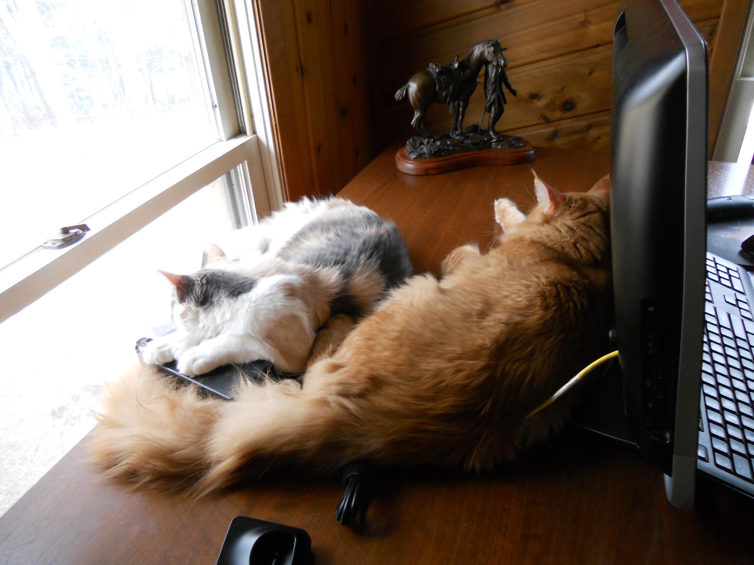 Dolly & Kramer (Gerbera & Gavin) (4).JPG