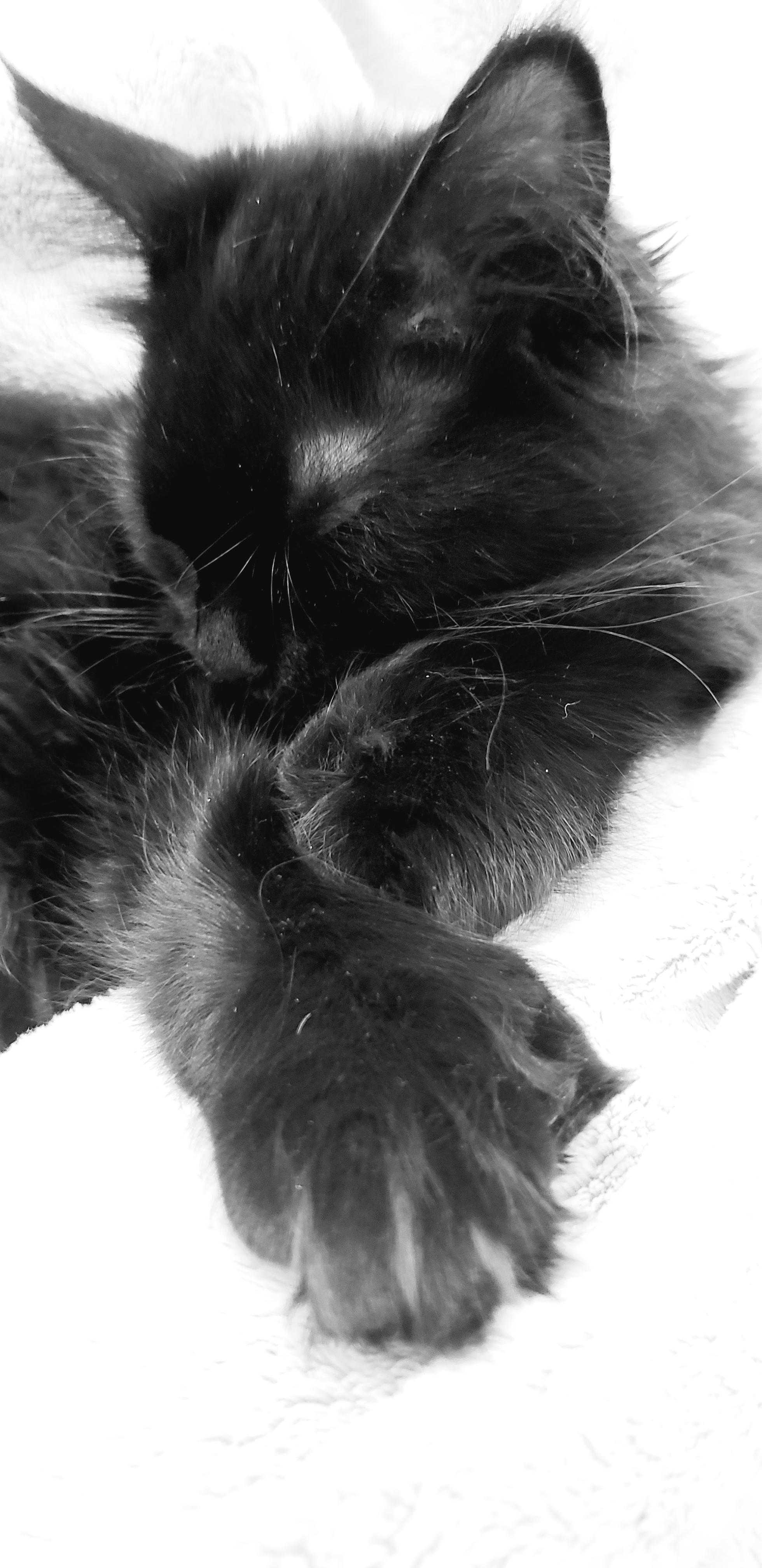 Catniss-Abby2.jpg